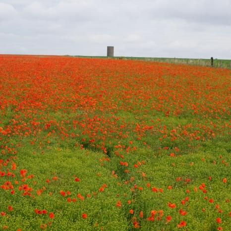 Across from Stonehenge - England